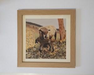 Sheep Art - Witchy & Yogi lamb framed