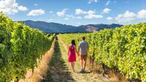 Auckland and Beyond Private New Zealand Tours