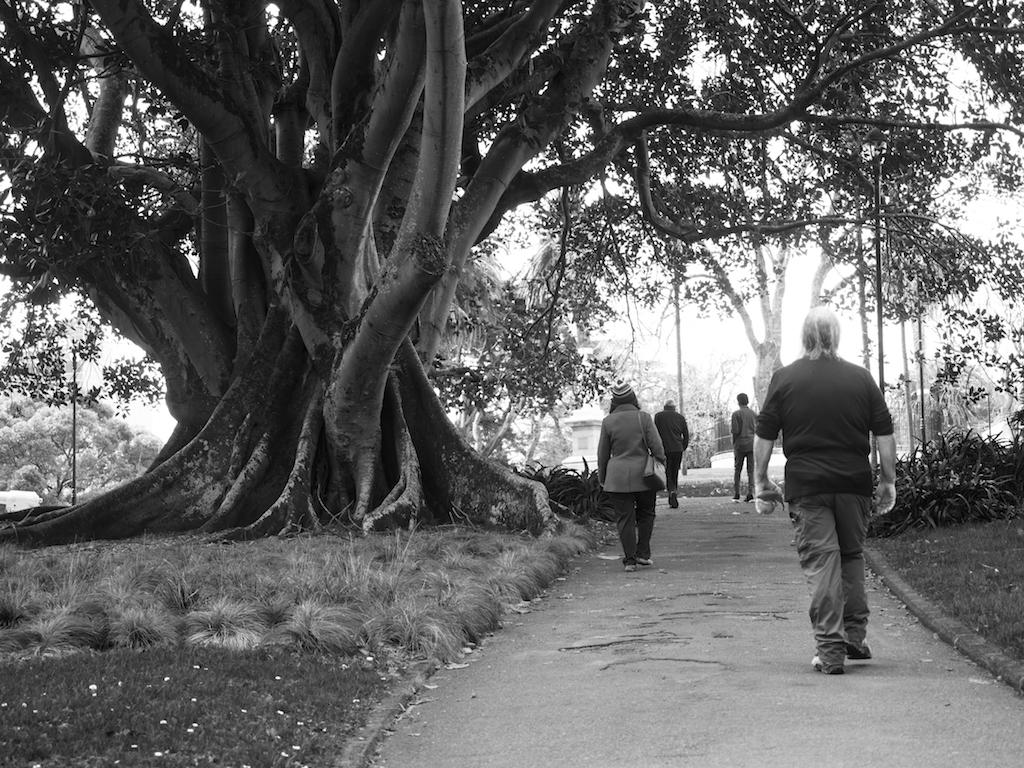 Albert Park - black & white - Street Photography Auckland