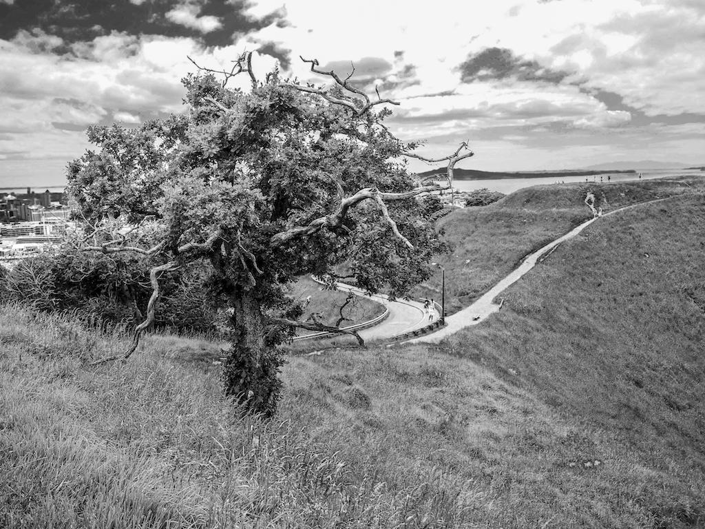 Mount Eden Tree - Black & White