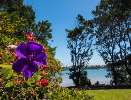 Orakei Basin Flowers - Street Photography Auckland