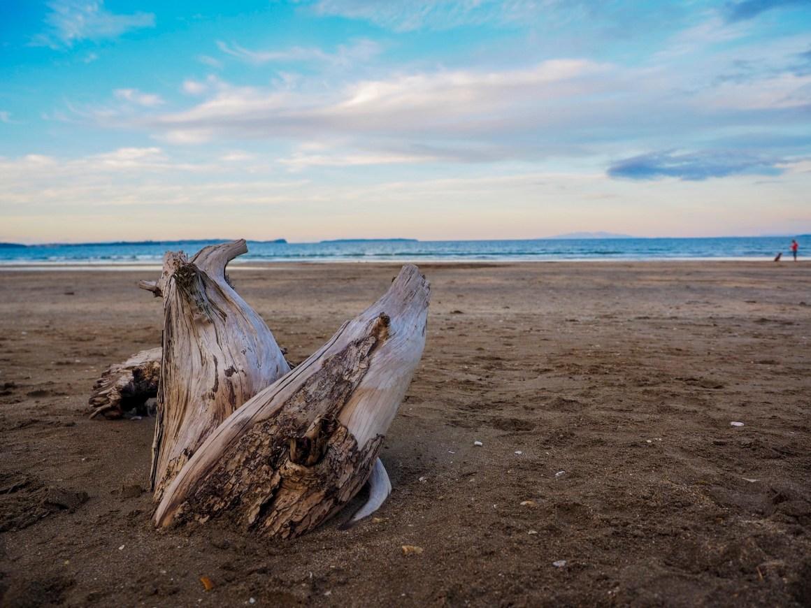 Driftwood Longbay Beach