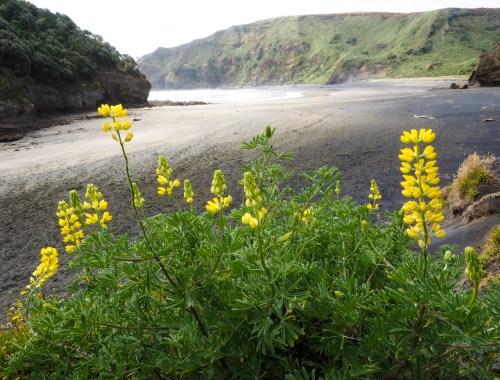 Bethells Beach Flowers