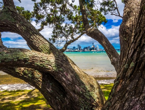 devonport-view-auckland-skyline