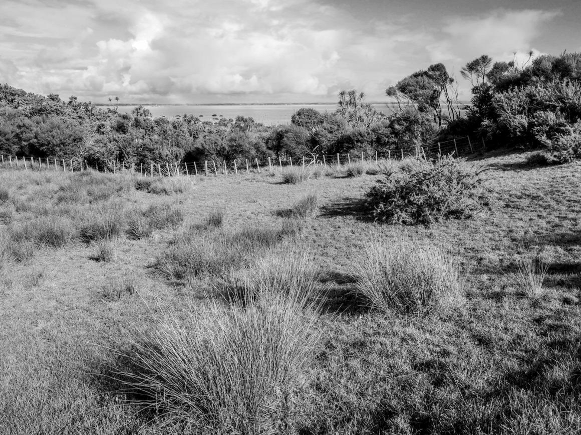 Puhinui Reserve Walk - Landscape Photography Auckland