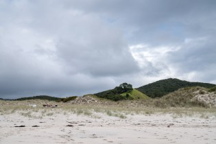 Dunes at Medlands Beach on Aotea Great Barrier Island