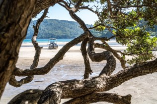 Trees at Low Tide at Tryphena Beach on Great Barrier Island, Aotea