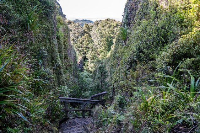 Windy Canyon Walk on Aotea Great Barrier Island