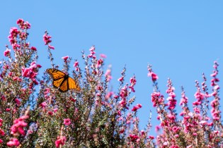 Spring Butterfly on Flowers