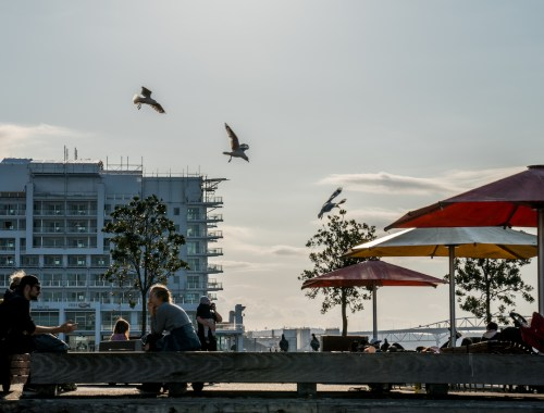 Queens Wharf People and Seagulls - Street Photography Auckland