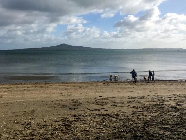 Early Morning Kohimarama, East Auckland