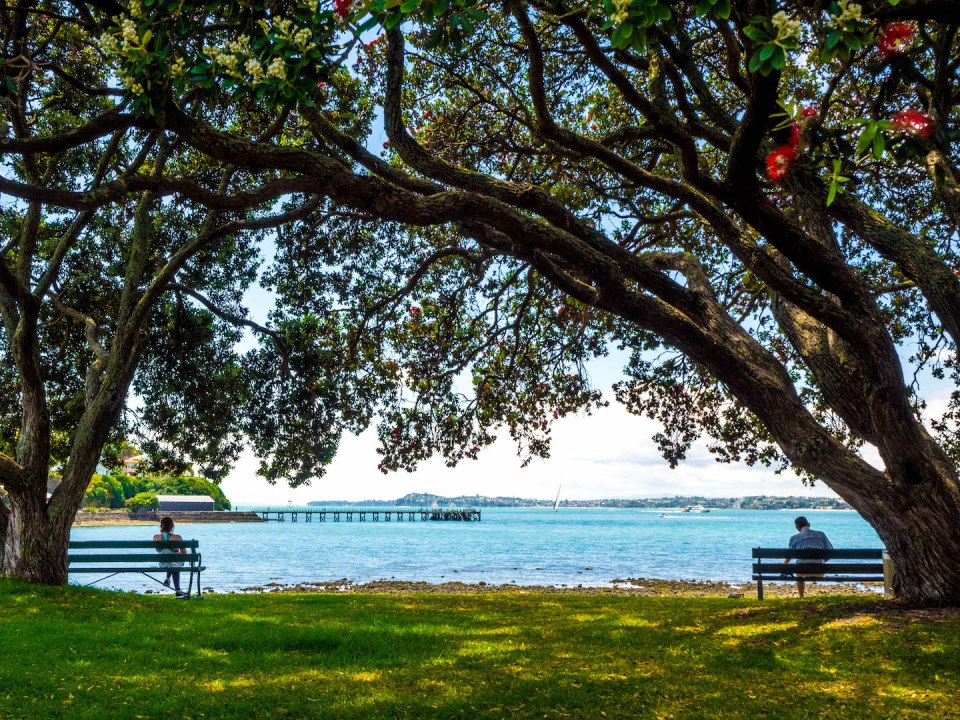 Lonely in Paradise - Devonport, Auckland New Zealand