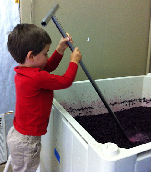 winemaker in training