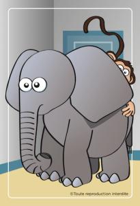 Cartes-Bongo-Éléphant-dans-la-pièce