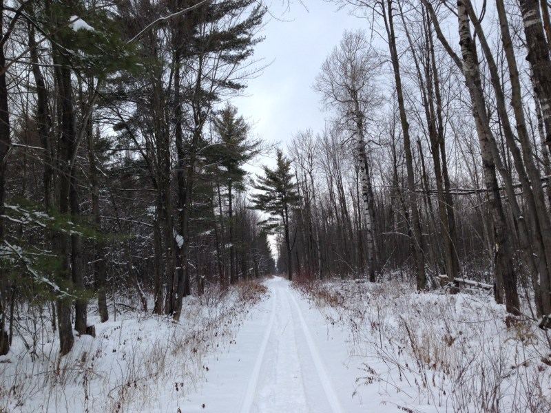 Larose Forest in winter