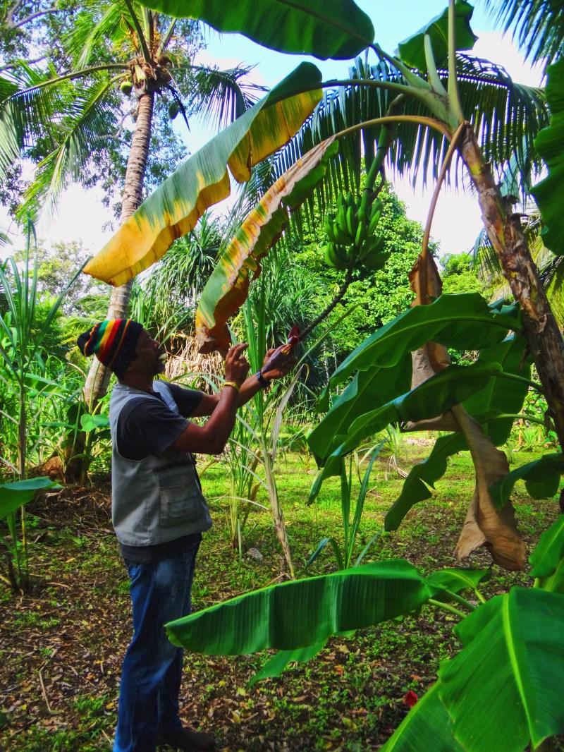A farmer on San Andres