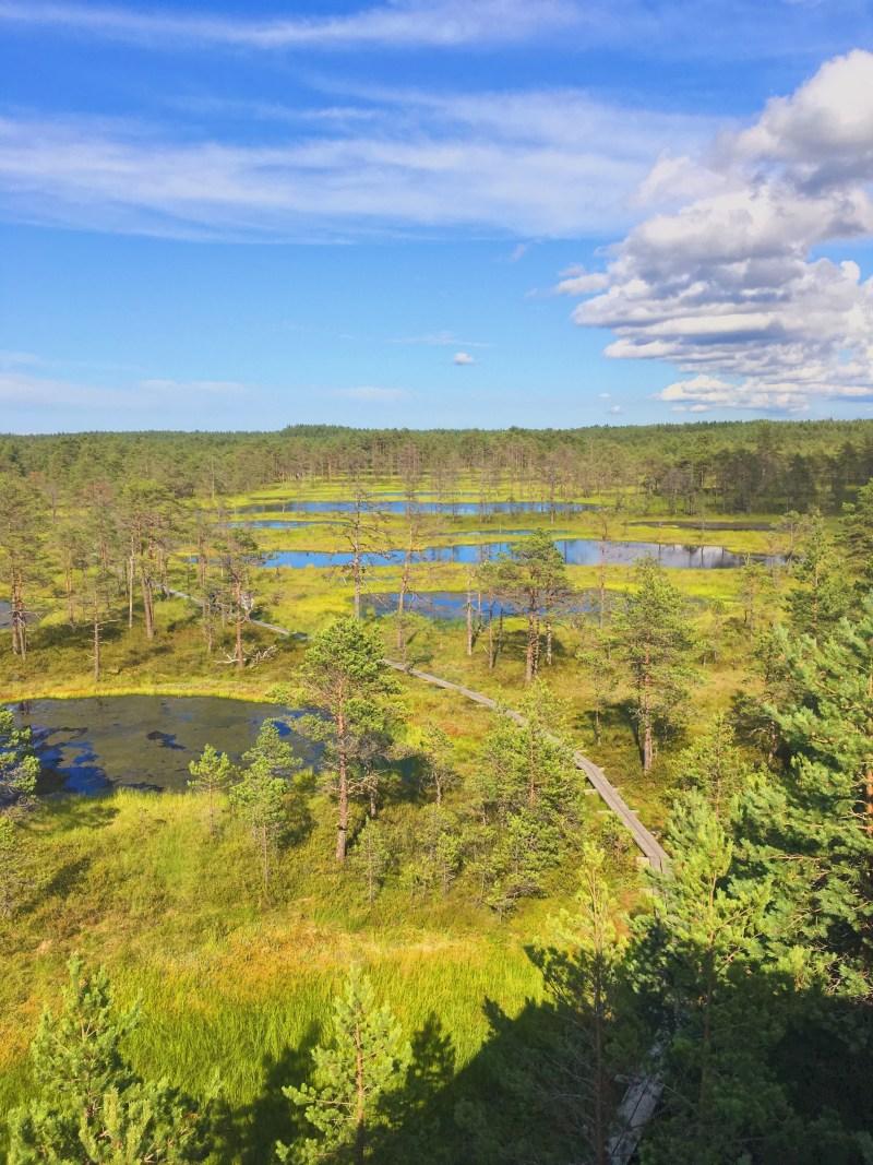 Viru Bog in Lahemaa National Park