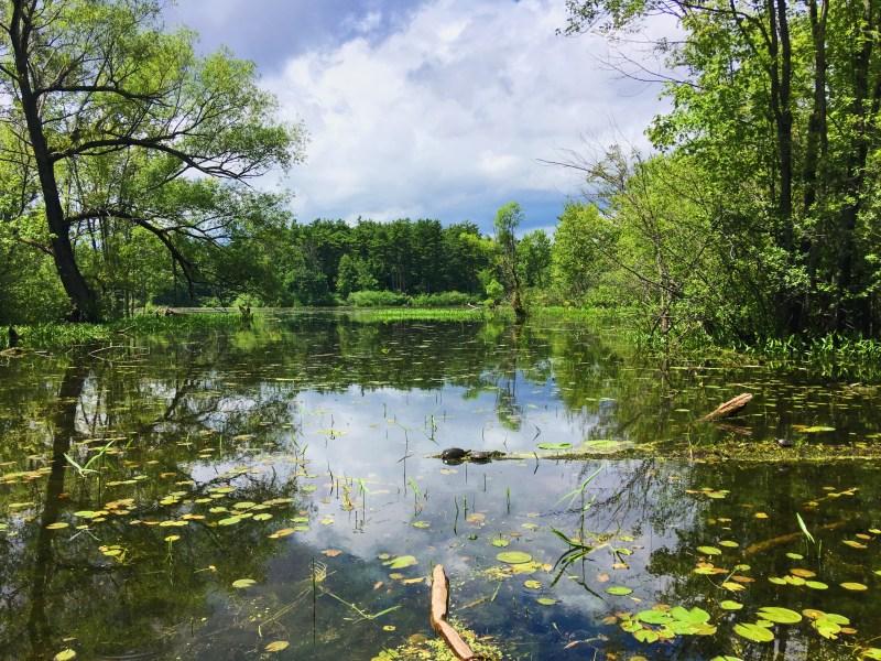Mud Lake in Ottawa