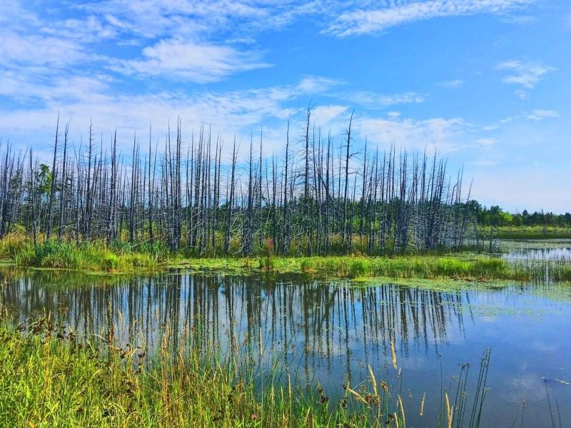 Forêt Marlborough