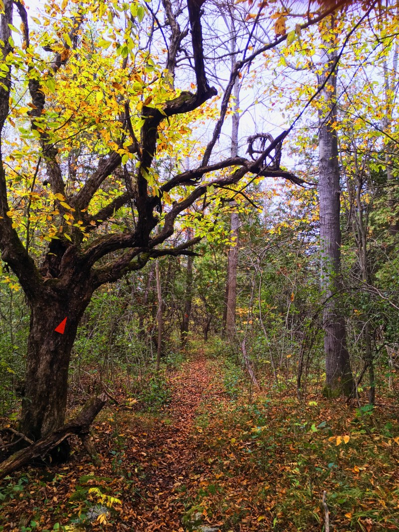 Rideau Trail in Smiths Falls