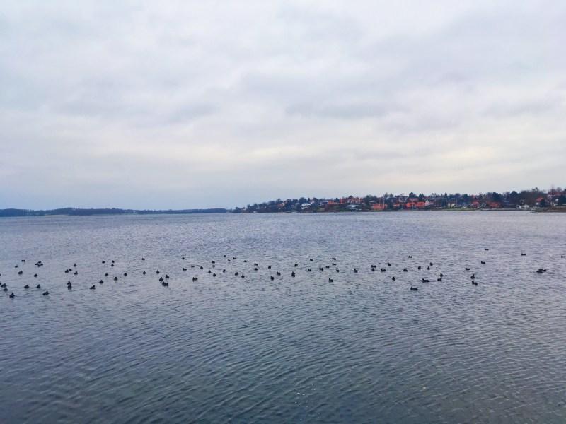Fjord de Roskilde