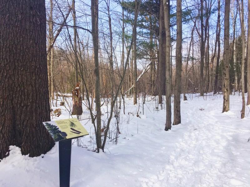 Arboretum of Ottawa