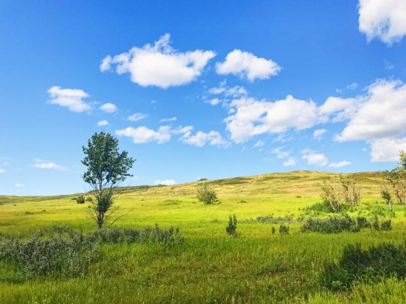 Grassland in Nose Hill Park
