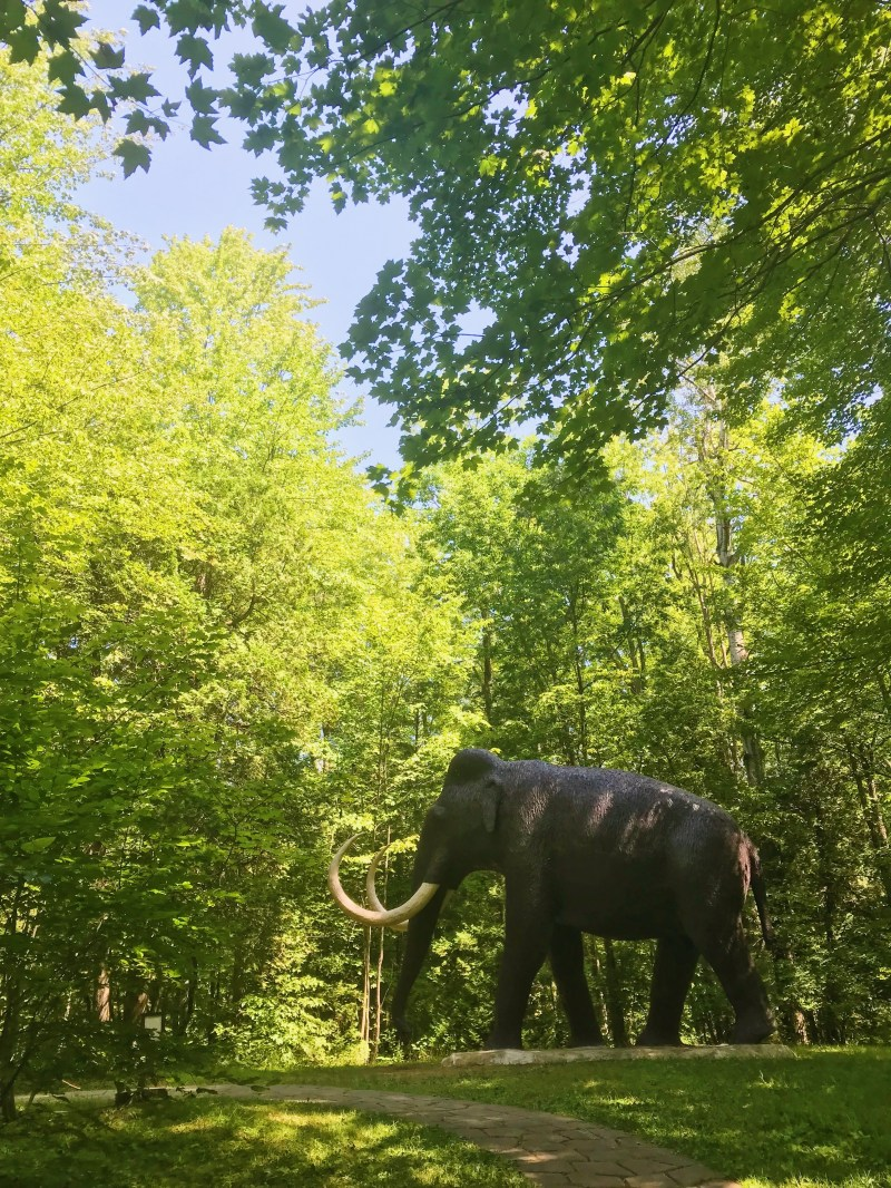 Mammoth in the forest
