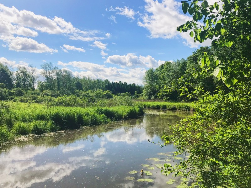 Gray's Creek Conservation Area
