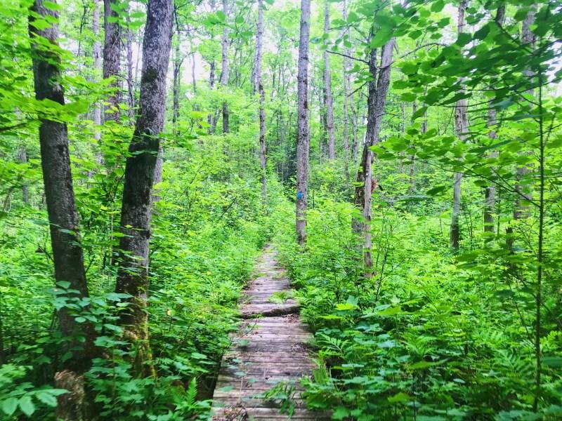 Samoset Trail