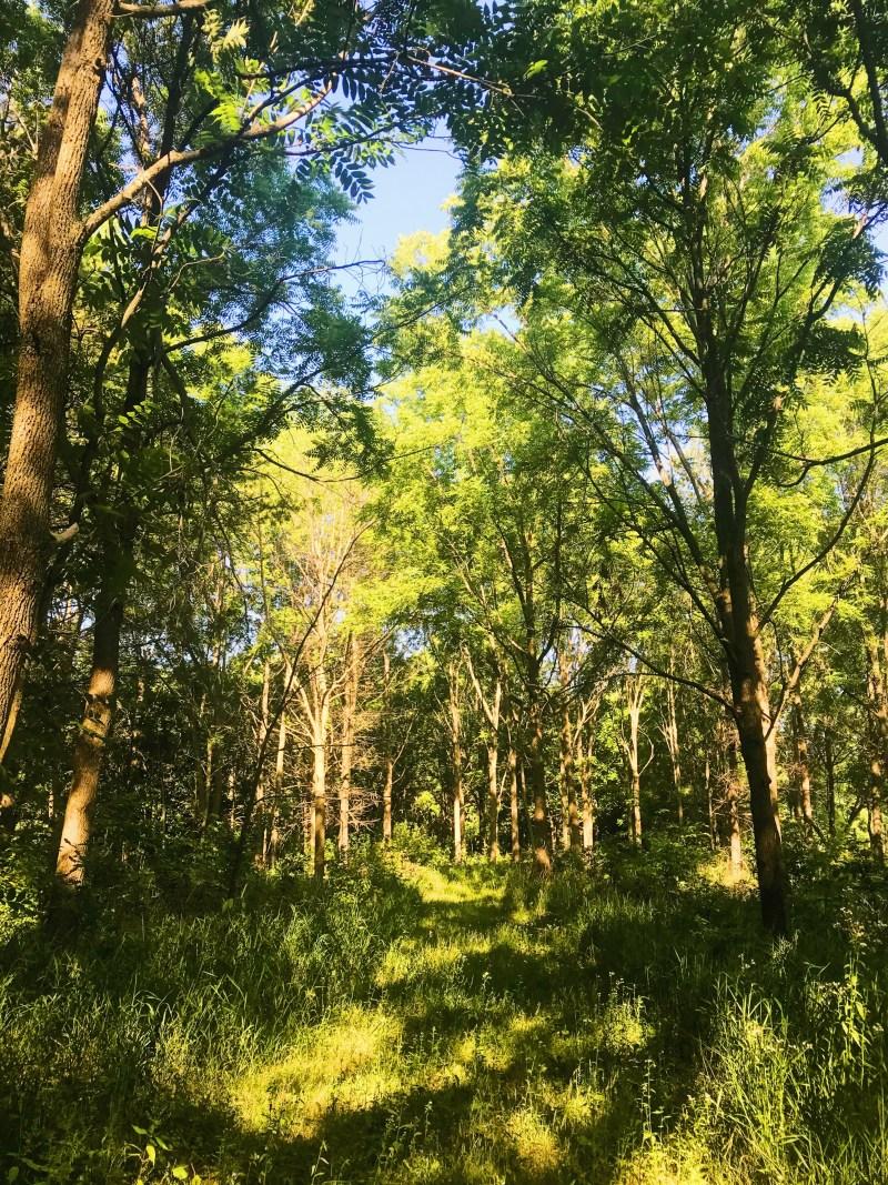 Oak Valley Pioneer Park