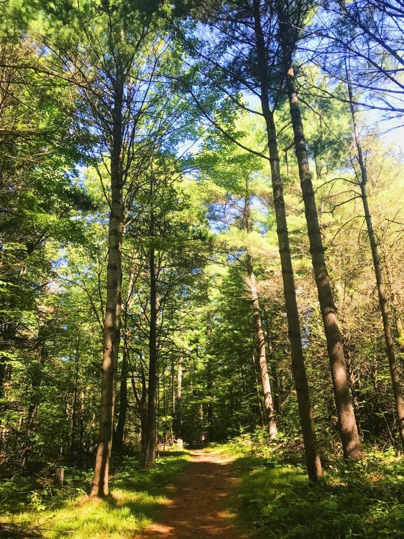 Sentier du mont Foley