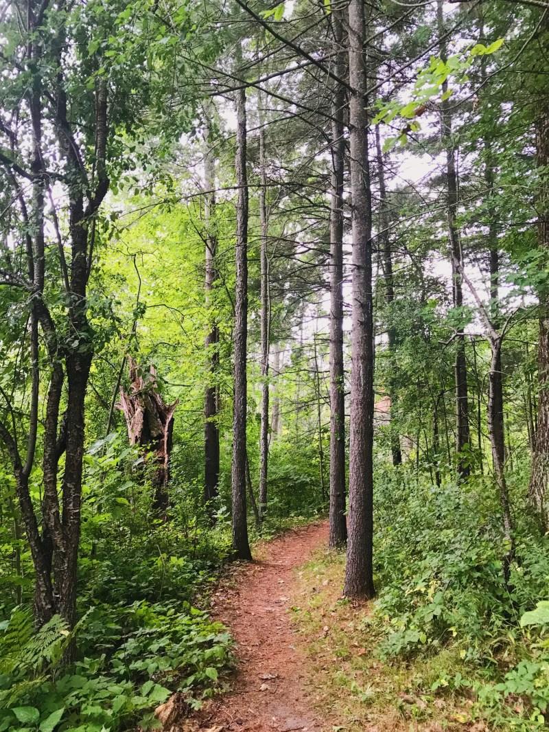 Trail at Jones Creek
