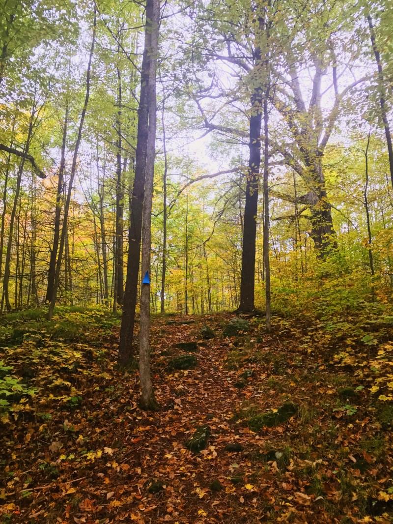 Meisel Woods trail
