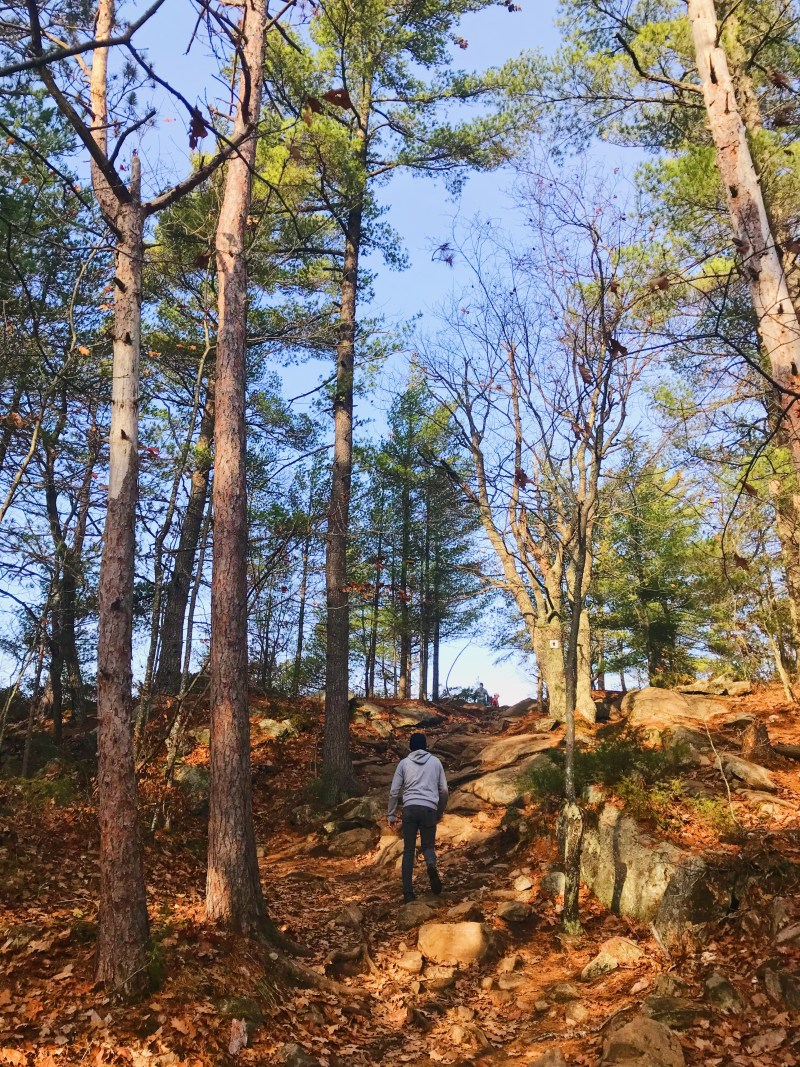 Sentier forestier vers Eagle's Nest