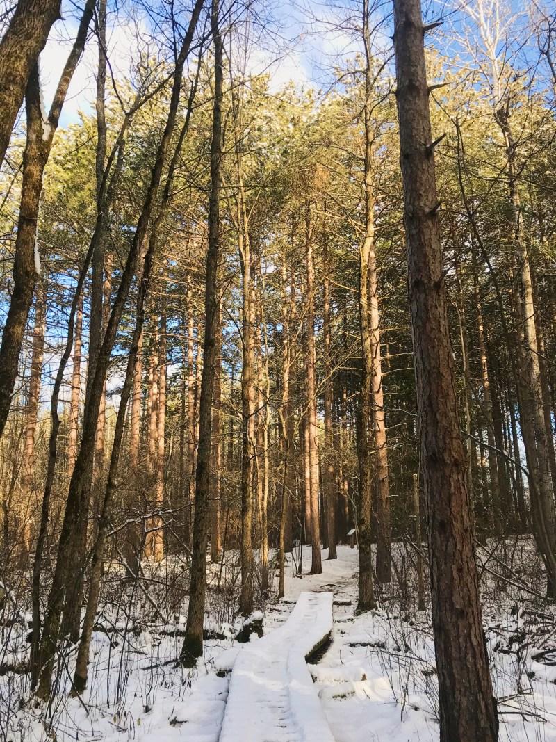 Forêt Limerick