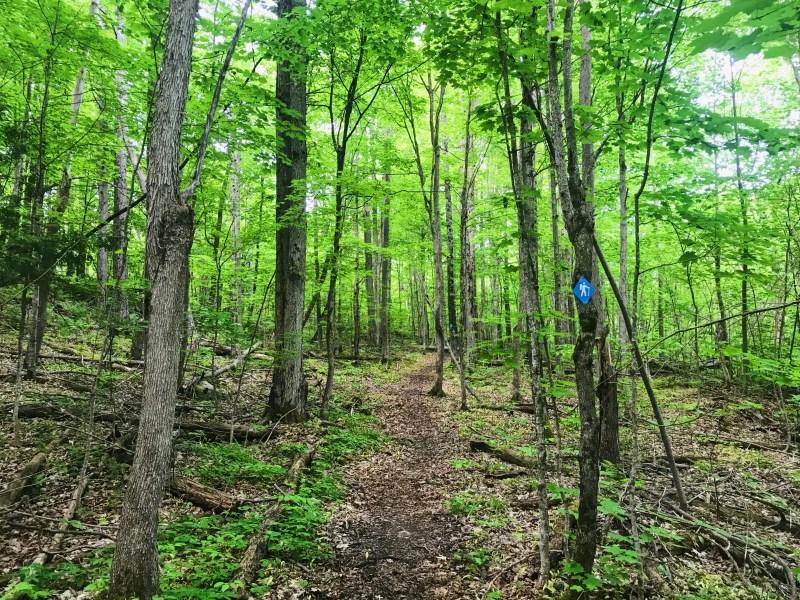 Beech Woods Trail