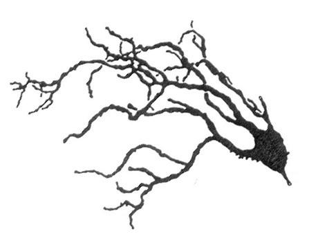 celula-pulpo