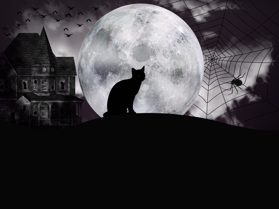 A halloween Playlist to spook you the spook out!