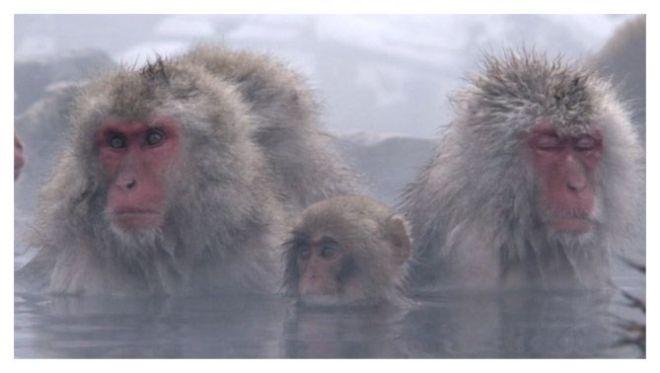 Primates - documental LIFE de la BBC