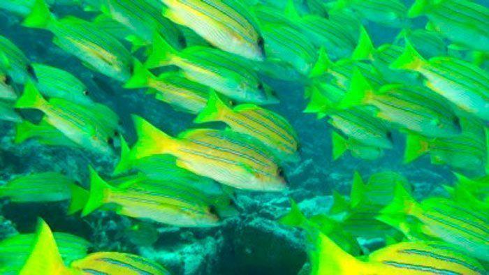 Arrecifes de Coral 3D