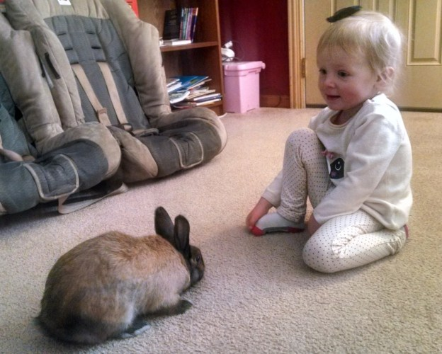 Meeting our friend's bunny. (She was asked to leave her golf club at home)