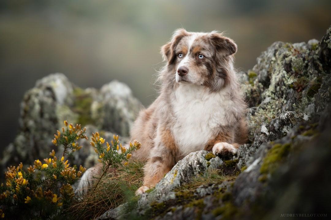 Dog Photography Workshop Natural Light