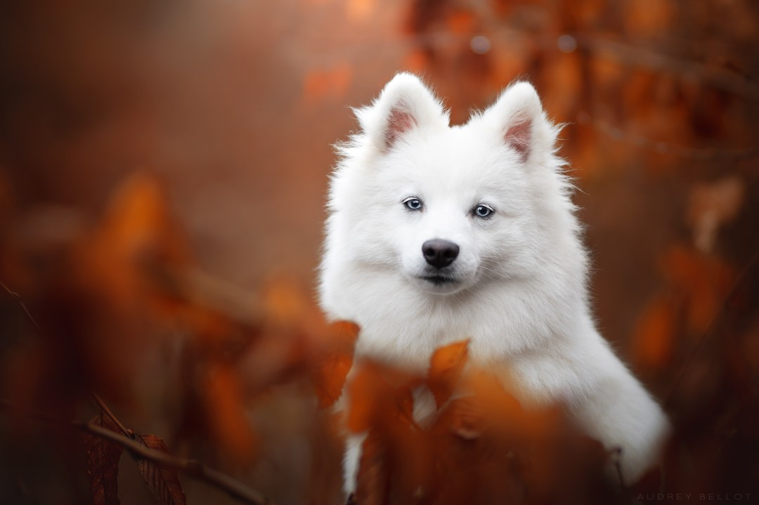 workshop photographie canine