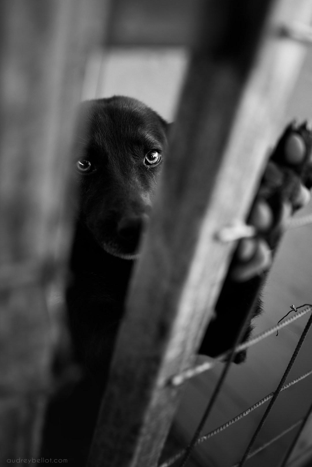 Photographie de chiens en Roumanie