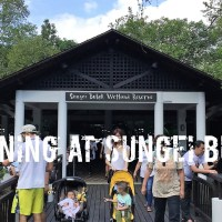 Sungei Buloh Wetland Reserve - Wetland in a City