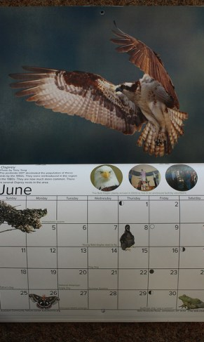 Each page of the natural history calendar has dates of natural happenings, holidays and other information about the world.