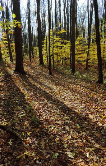 Longer shadows in the fall. Photo by Katie Finch