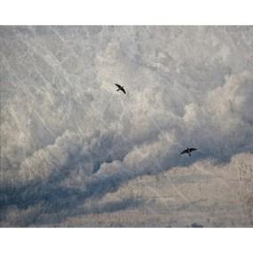 Two Birds - Jennifer Schlick