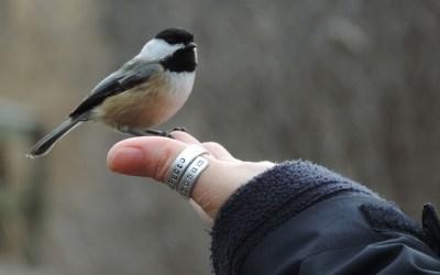 Winter Birds by Katie Finch